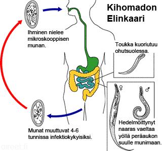 Kihomadon Munat